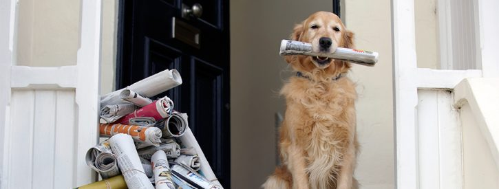 a dog delivering the newspaper in its mouth, ready to add to the pile of newspapers already delivered on the porch