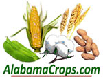"soybean, corn, cotton, wheat, and peanuts with the words ""Alabama Crops . com"""