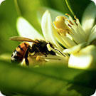 a bee hovering next to a flower blossom
