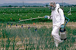 pesticide applicator in full hazard suit with a hand held sprayer in the field