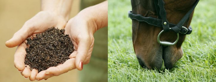 an image of two hands holding soil alongside an image of a horse eating grass